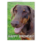 Handsome smiling red doberman card