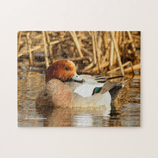 Handsome Stranger in Town Eurasian Wigeon Jigsaw Puzzle