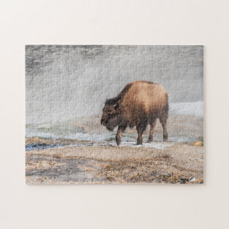 Handsome Young Bison or Buffalo Jigsaw Puzzle