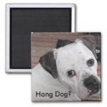 Hang Dog? Magnet