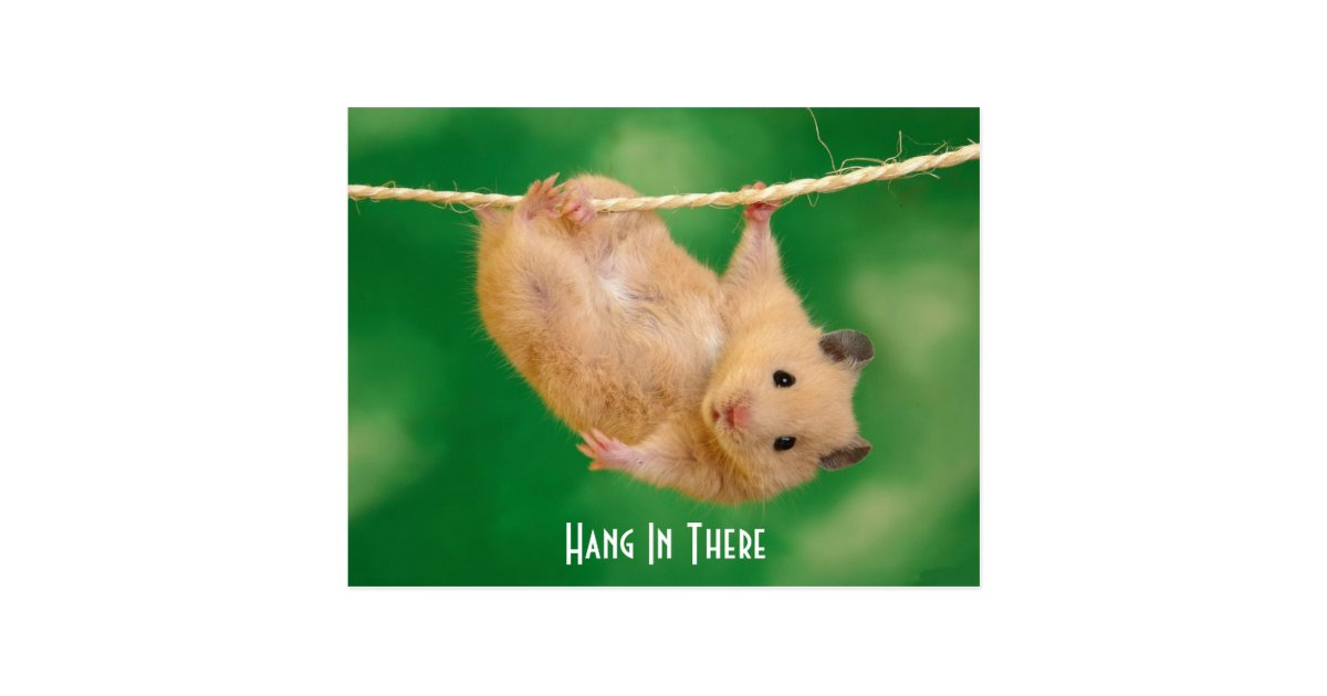 hang in there hamster postcard. Black Bedroom Furniture Sets. Home Design Ideas