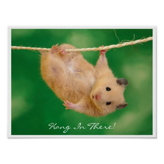 Hang in There Hamster Poster