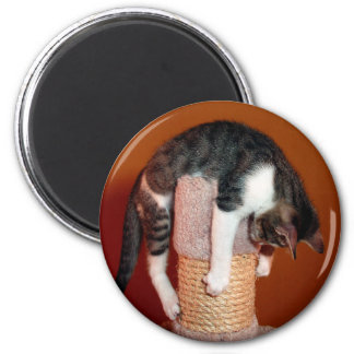 Hang in There Humorous Tabby Cat Magnet