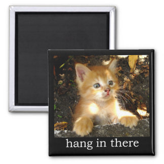 Hang In There - Kitten Magnet
