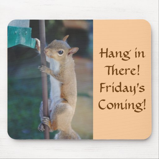 Hang in There, Squirrel on Bird Feeder Mousepads