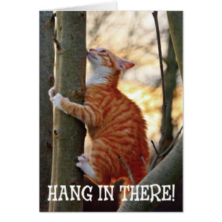 Hang in There with Cat Card