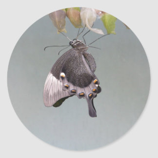Hanging Around Round Sticker