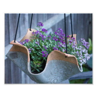 Hanging Flowers Photo