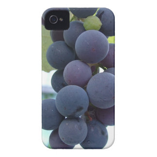Hanging Grapes iPhone 4 Case-Mate Cases