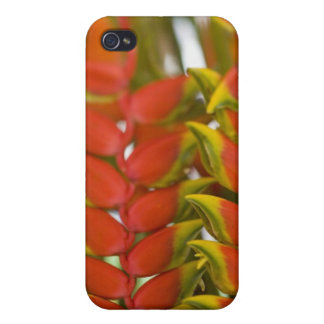 Hanging Heliconia, Weekly Tuesday fruit & iPhone 4 Cover