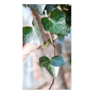 Hanging Ivy [Business] Pack Of Standard Business Cards