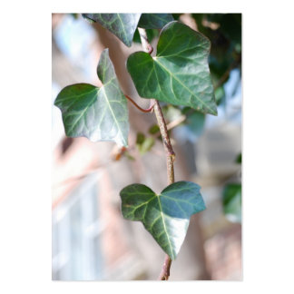 Hanging Ivy [Chubby] Pack Of Chubby Business Cards