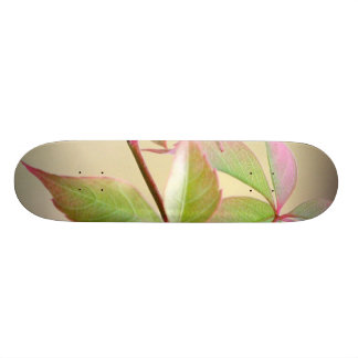 Hanging Leaves Skateboard Decks