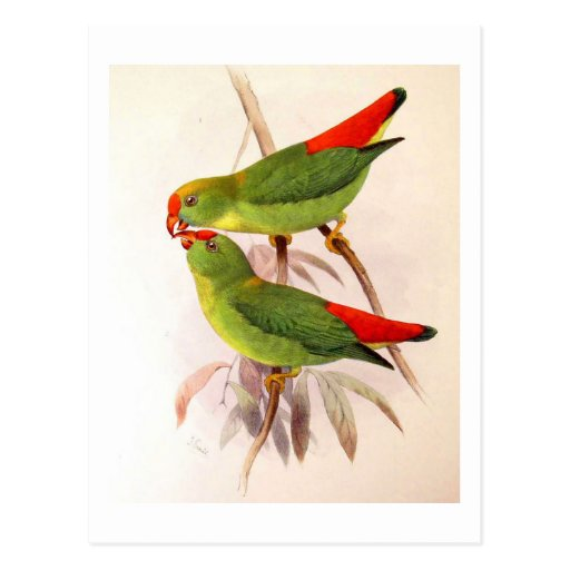 Hanging Parrots Post Cards