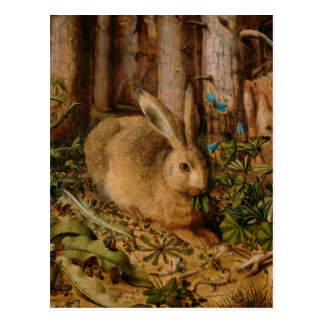 Hans Hoffmann A Hare In The Forest Post Cards