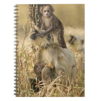 Hanuman Langur adult with young Notebook