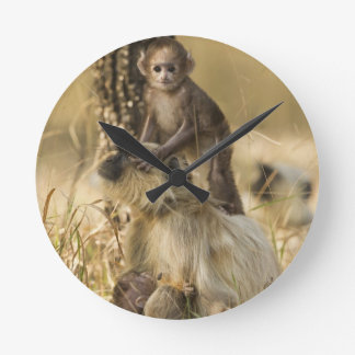 Hanuman Langur adult with young Round Clock