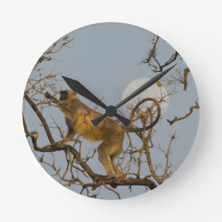 Hanuman Langur climbing in tree Round Clock