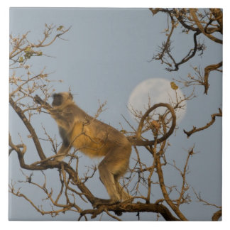 Hanuman Langur climbing in tree Tile