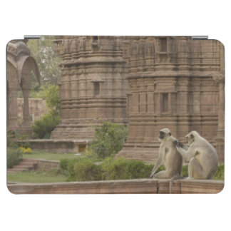 Hanuman Langurs or Black-faced, Common or Grey iPad Air Cover