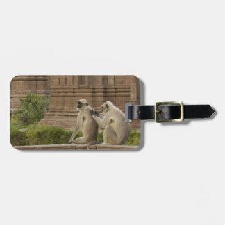 Hanuman Langurs or Black-faced, Common or Grey Luggage Tag
