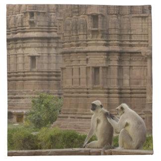 Hanuman Langurs or Black-faced, Common or Grey Napkin