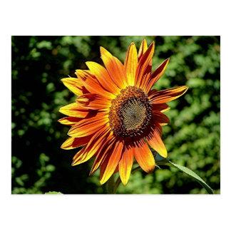"""Happiness in Orange""  Sunflower Postcard"