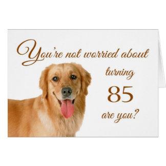 Happy 85th birthday, worried lab greeting card