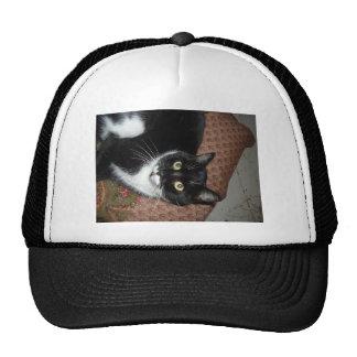 Happy Adopted Cat Cap