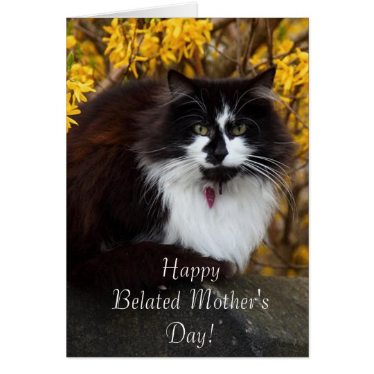 Happy Belated Mother's Day Cat greeting card
