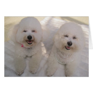 Happy Bichons! Card