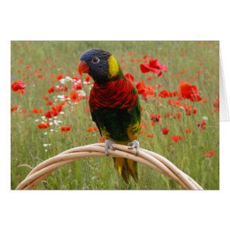 Happy Birdday! Greeting Cards