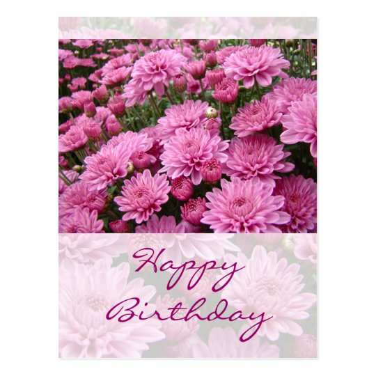 Happy Birthday - A Sea of Pink Chrysanthemums