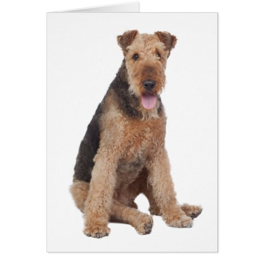 Happy Birthday Airedale Terrier Puppy Dog Card