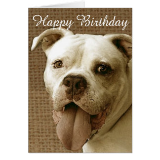 Happy Birthday American bulldog greeting card