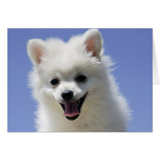 Happy Birthday American Eskimo Puppy Dog Card