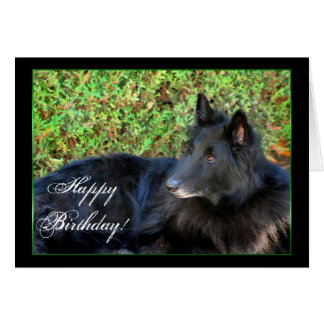 Happy Birthday Belgian Shepherd greeting card
