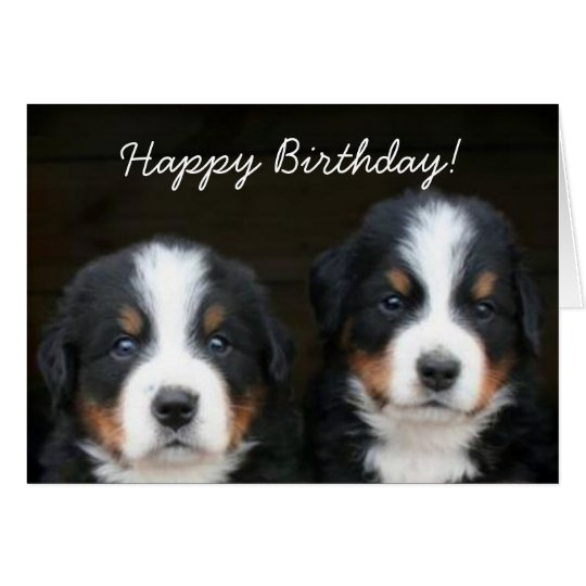 Happy Birthday Bernese pups greeting card