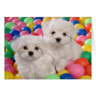 Happy Birthday Bichon Frise White Puppy Dog Card