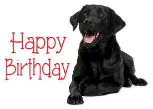Happy Birthday Black Labrador Puppy Dog