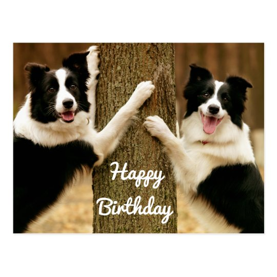 Happy Birthday Border Collie Puppy Dog Rustic Postcard