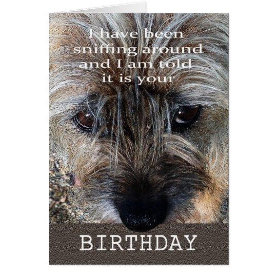 Happy Birthday, Border terrier sniffing around. Card