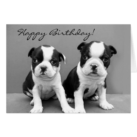 Happy Birthday Boston Terrier greeting card