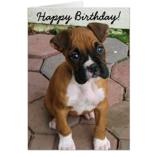 Happy Birthday Boxer puppy greeting card