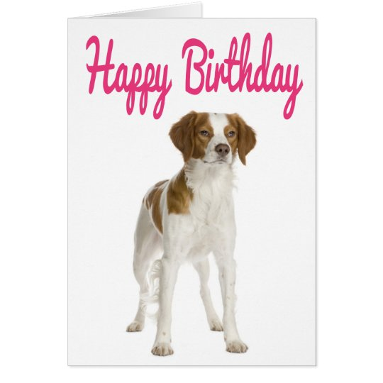 Happy Birthday Brittany Spaniel Puppy Dog Card