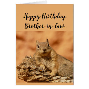 Happy birthday brother in law cards invitations zazzle happy birthday brother in law funny squirrel relax card bookmarktalkfo Choice Image