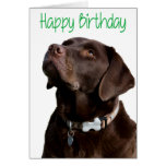 Happy Birthday Brown Labrador Retriever Puppy Card