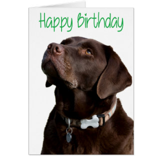 Happy Birthday Brown Labrador Retriever Puppy Card