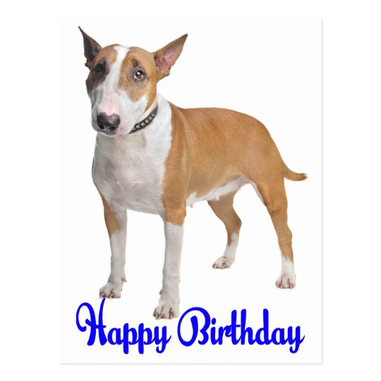 Happy Birthday Bull Terrier Puppy Dog Postcard