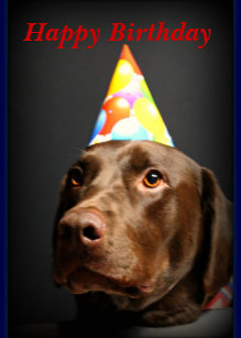 Happy Birthday CardChocolate Lab Card